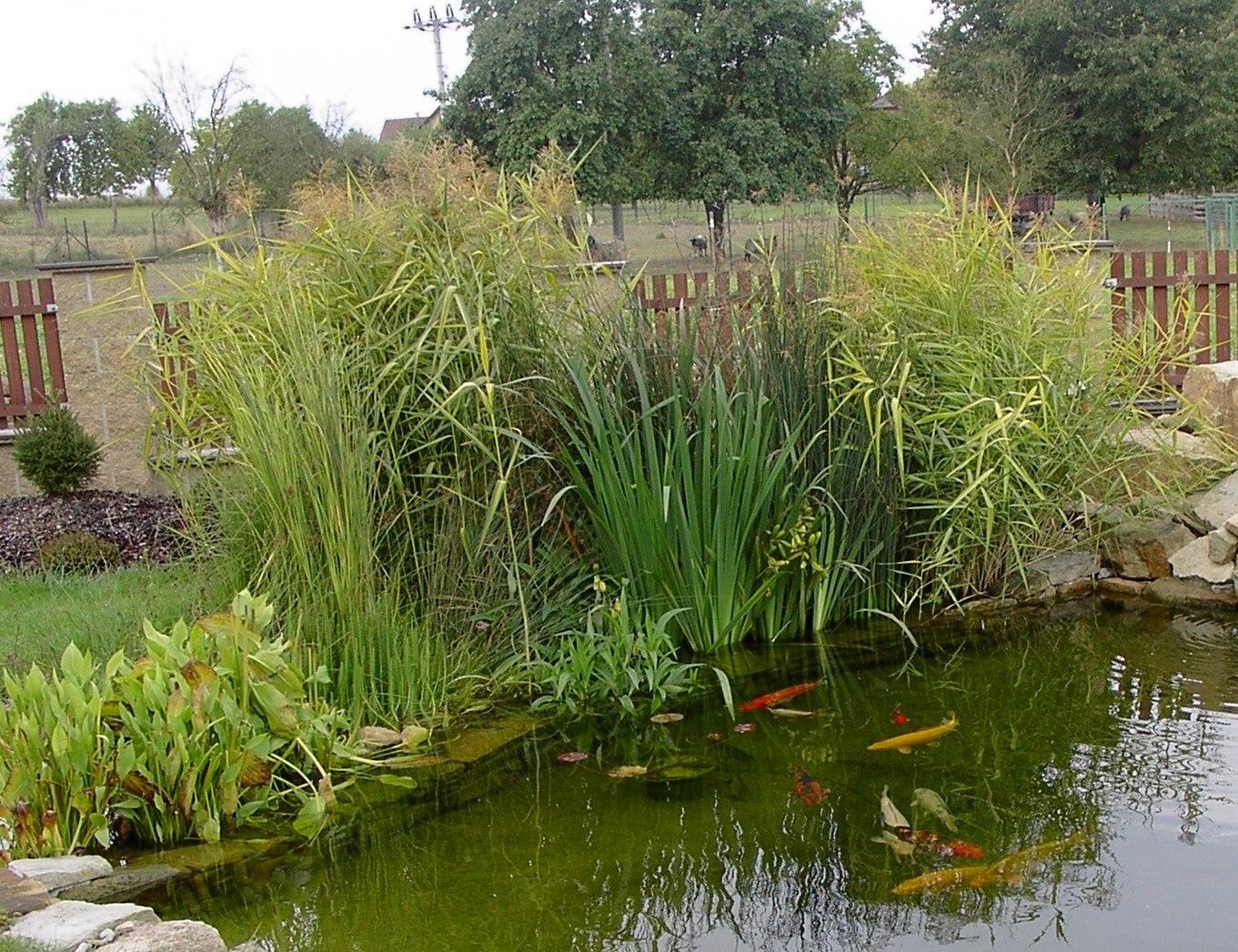 Rostliny (&;vodní, bahenní, pobřežní&;) využíváme jako nedílnou